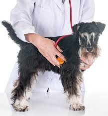 Best Stethoscope for Veterinaries